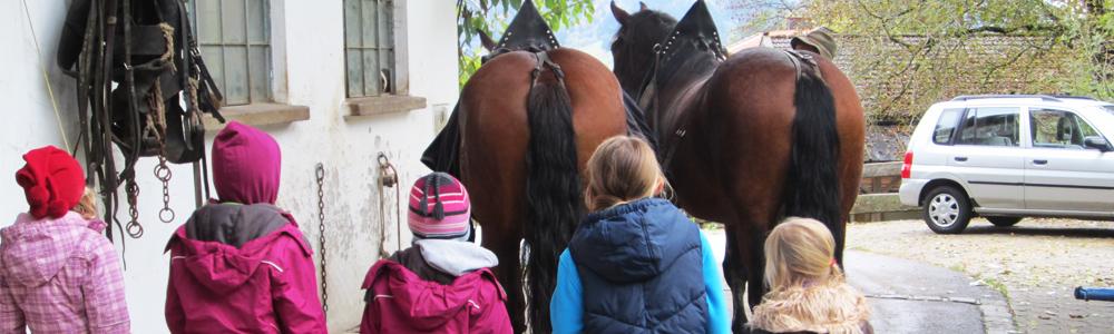 Pferdekutschenfahrt Vorberitung
