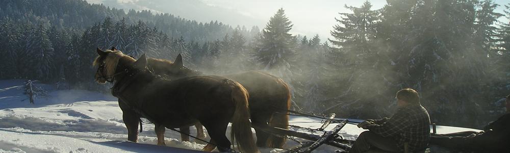 Pferdeschlittenfahrten Bayern